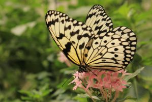Butterfly 2 by rayna23