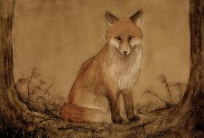 young fox by moussee