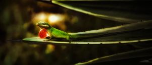 The Call of the Anole by AugenStudios