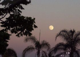 Moon over palms by shelly349