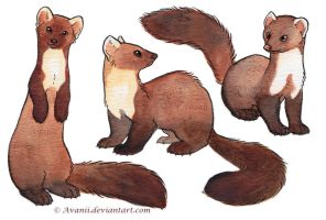 Watercolour Martens by Avanii
