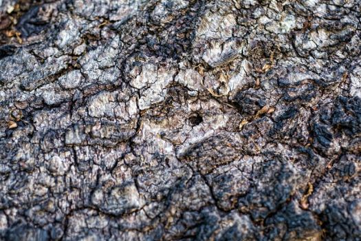 Bark Texture 1 by 0-Symmetry-0