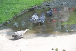Bird Bath In the Puddle, the Gathering 4 by Miss-Tbones