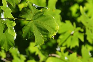 Leaves 1209.02 by Dilong-paradoxus