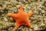 starfish by thevictor2225