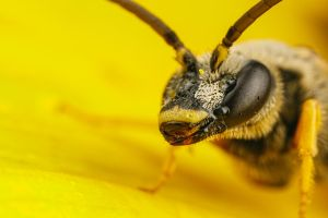 Solitary Bee Portrait by dalantech
