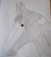 Horse Drawing by Trissacar