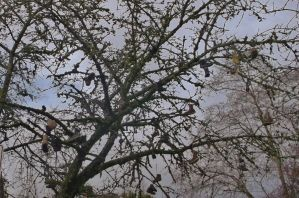 Shoe tree 2 by lucium55