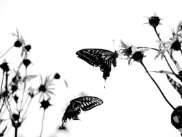Butterflies.. by Laetishaa
