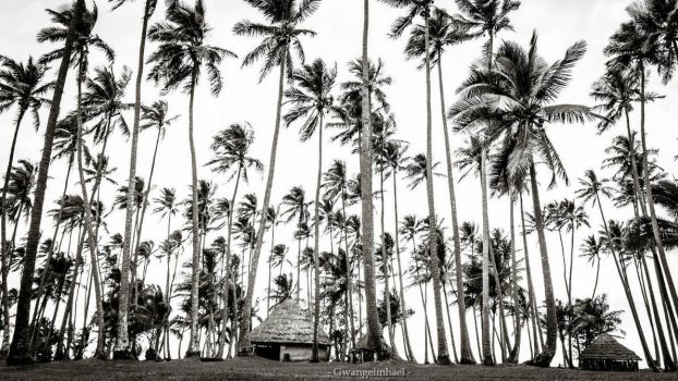 The coconut plantation of Tiakan by Gwangelinhael
