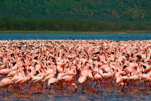 Flock of Flamingoes by porpierita