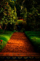 path through the orange trees by kikukaya
