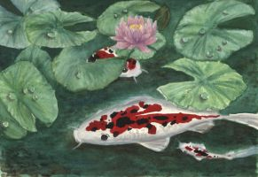 Koi Fishes in Pond by SpyG