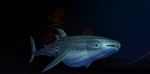 MMD Newcomer Whale Shark + DL by Valforwing