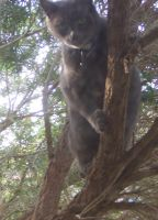 Tree Climbing by aesthetique