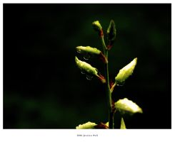 Peace of Growth by orbatid