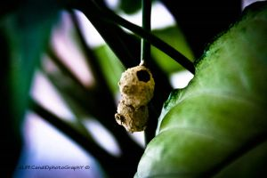 the house of termite by AlipSuhaimi