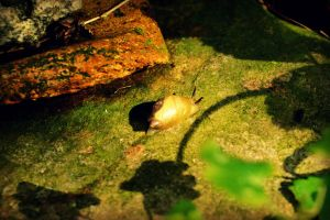 A Snail's Life by donnatello129