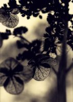 Lace on a Leaf in Winter by neuro-riviera