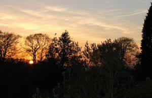 The Western Sunset Through the Trees by Aderes-Devorah