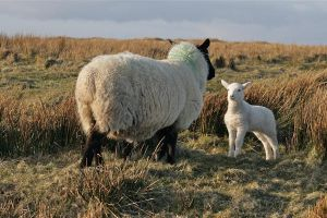 White Baby Sheep by Ness8Bit