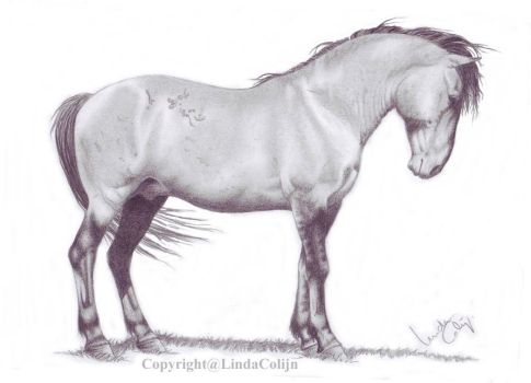 The lead stallion finished by LindaColijn