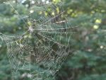 spider web stock by stormymay888