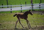 Foal Stock 58 by Vance-Equine-Stock