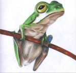 Frog by jiles