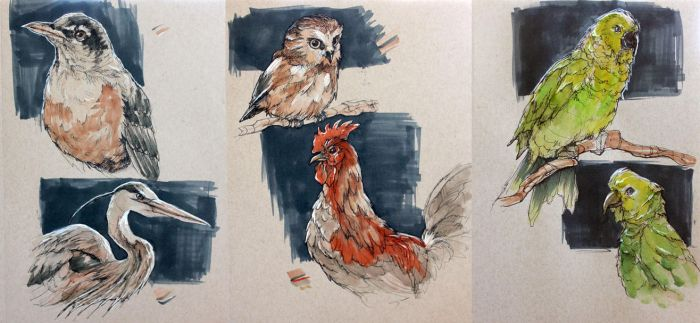 CW: Bird Sketches by taho