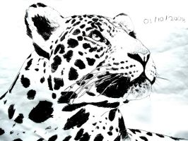 Leopard by TheEyesNeedMore