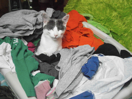 I can fold clothes too! =^.^= by nizzie12