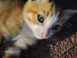 Lonly Cat 3 by hotamr