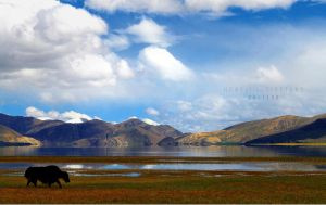 Home of the Tibetans by ChiFeng-dA