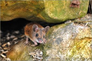 mouse 2 by brijome