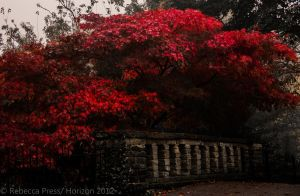 Fire bush and bridge high contrast by Elfsire
