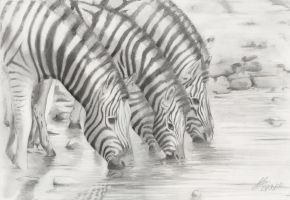 Zebras at the water hole by wildpaintings