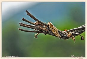 End-of-Rope by Andrehul