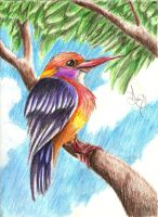 Colorful Bird by DrakenAngelus2