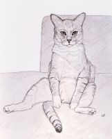 Sitting Cat by Bastet-mrr