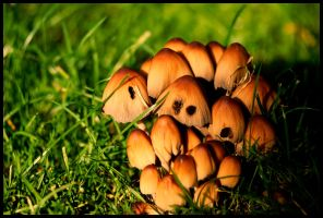 Fungal Decay - dxd by dxd