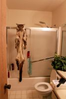 There's a Cougar in the Shower by NaturePunk