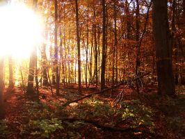 forest 44 by Pagan-Stock