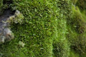 Moss Wall by ByronGiant