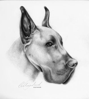 Great Dane by CecilieAusland
