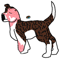 pittie-Border collie mix adopt CLOSED by J4-Coltrain