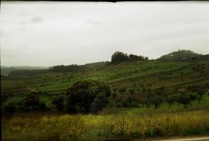 Neverending Green Landscape by toy-camera