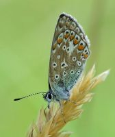 butterfly 8 by decmeister