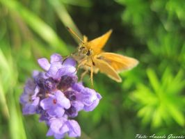 A butterfly by AmandaGruvnas97
