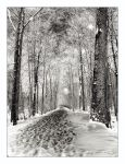 snowscape by iridel